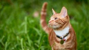 Чому котики правлять світом або Якпричарувати роботодавця