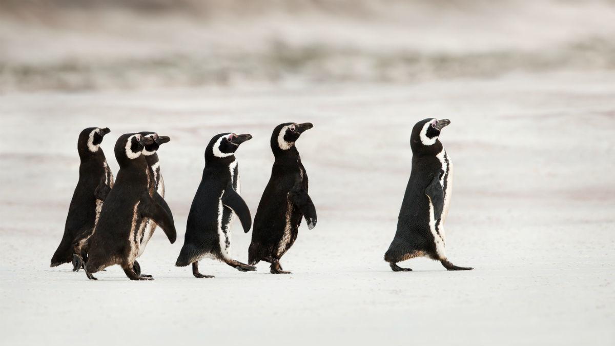 3 лідерські навички, які потрібні навіть досліднику Антарктики