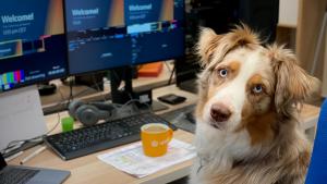 Як зробити свій офіс pet-friendly: стереотипи й підводні камені