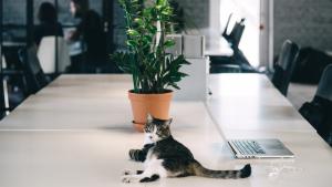Як pet-friendly культура допомагає компаніям будувати HR-бренд