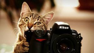 Как должна выглядеть фотография в резюме
