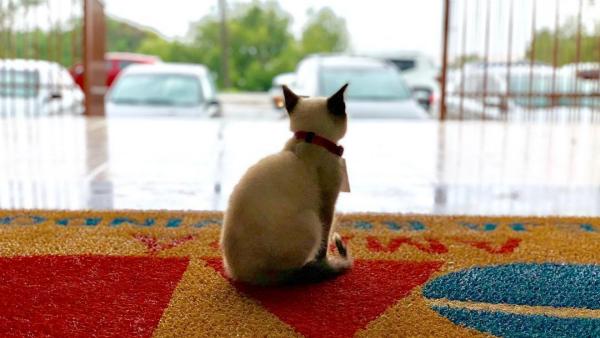 Фото из Instagram кота dr_leon_advogato