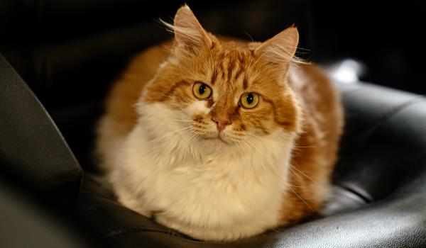 На фото кот Кеша из Dictum